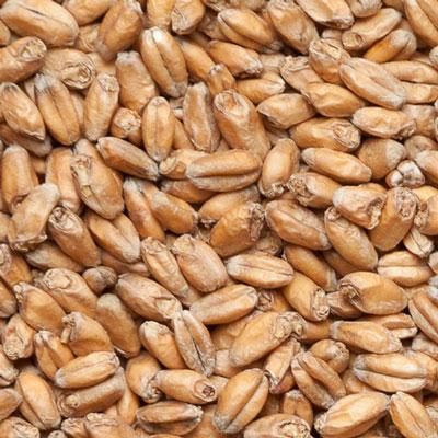 Wheat Malt Sladovny Soufflet